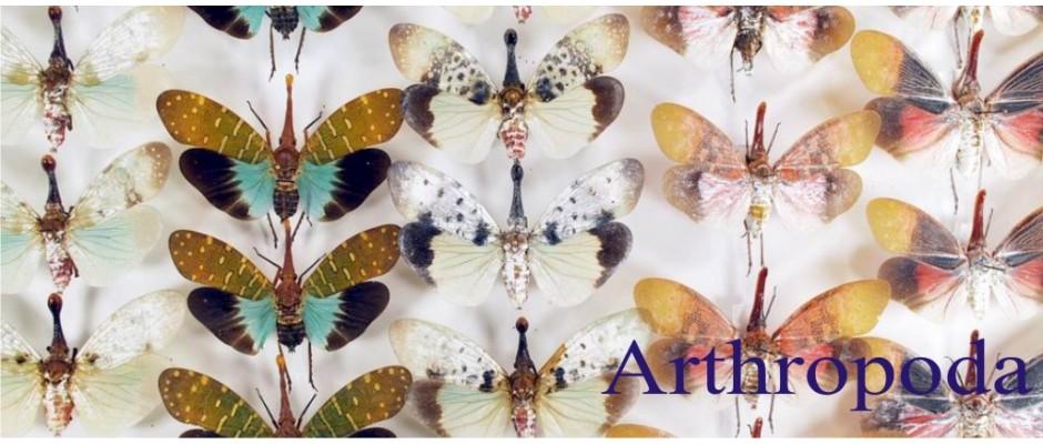 archopods