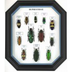 Бабочки и жуки в рамках, как  оформление квартир и офисов