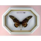Коллекционирование жуков и бабочек