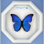 Бабочки в рамке