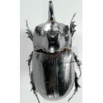 Trichogomphus martabani