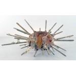 Stereocidaris Granularis 202