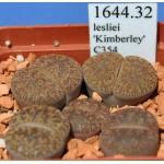 LITHOPS lesliei 'Kimberley' C354